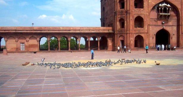 delhi mosque pigeons