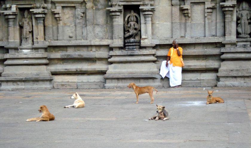 Tiruvannamalai - Spiritual dogs