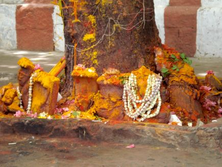 Sri Kalahasti - devotion tree